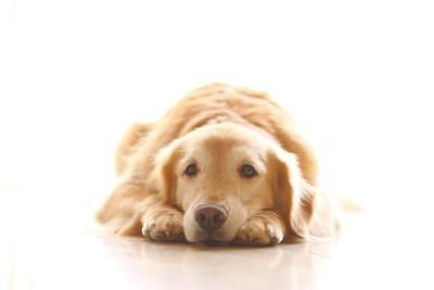 犬が服従しているときに見せる4...